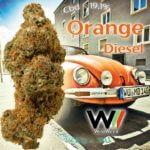 Orange Diesel CBD 19.1%