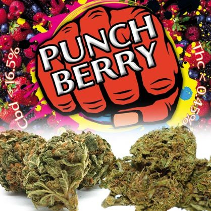 Red Berry Cannatonic 16.3%