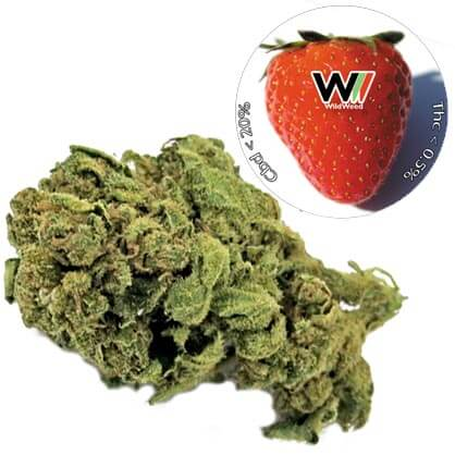 StrawBerry CBD 20.7% cannabis light