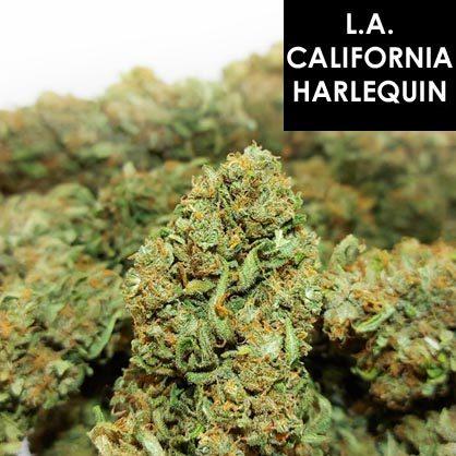 L.A. California Harlequin 18.6%