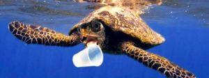 tartaruga inquinamento
