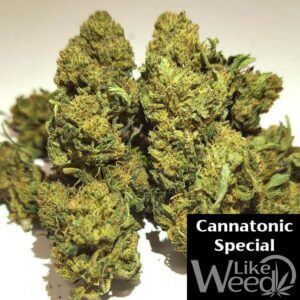 Cannatonic Special