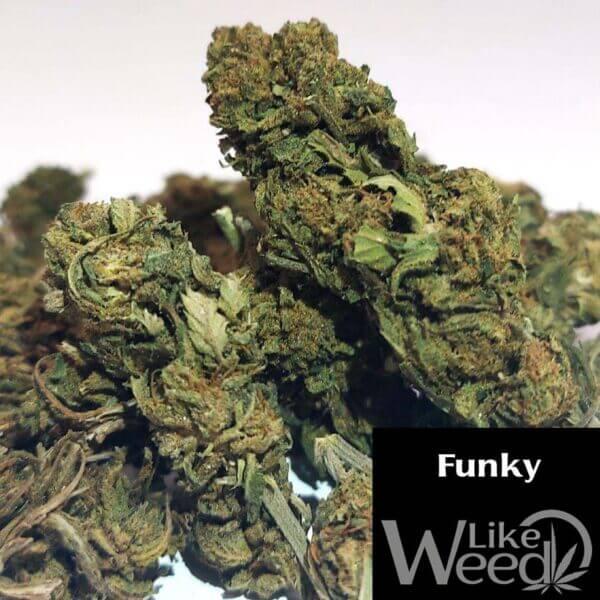 Funky Cream Caramel CBD