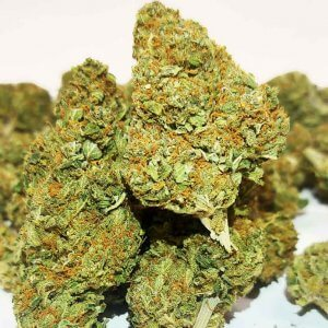 amnesia it weed cannabis